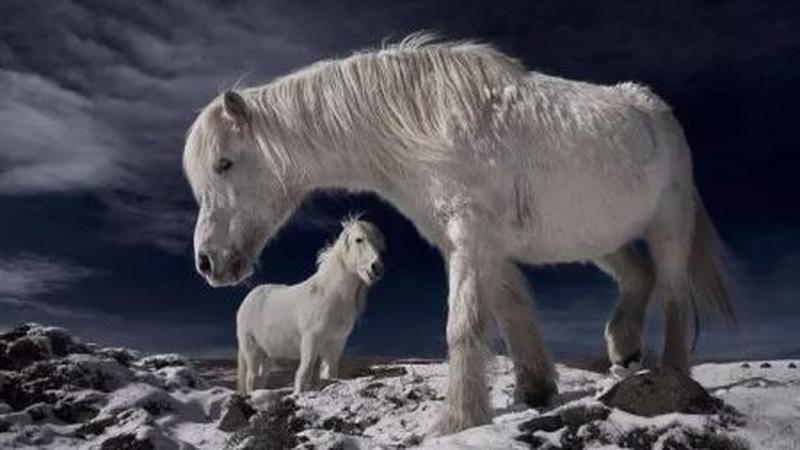为什么中国有着数千年的养马历史,却不产好马?