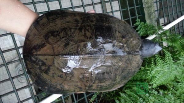 龟鳖养殖的内容简介