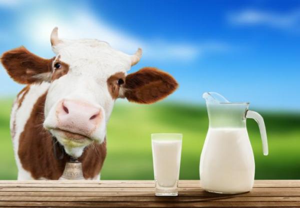 睡觉前喝牛奶会长胖吗