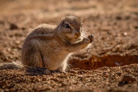 《非洲这种神秘地松鼠,为何通过碰鼻子就能认出亲戚?》