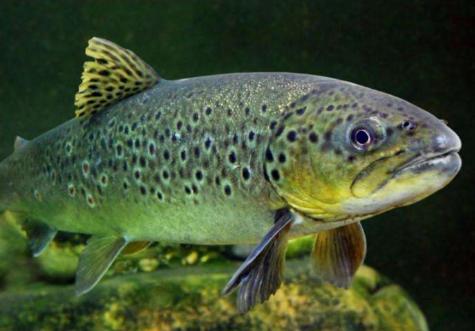 新鲜的大鱼哪里钓,[新鲜的大鱼] [黑爪龙虾] [新鲜的白鳞鲑鱼] 在哪能钓到?