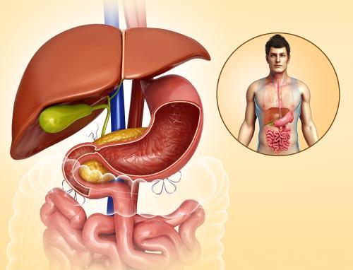 人的肝脏在什么部位,能画个图吗?