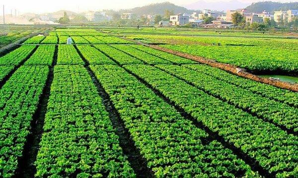 农业的地位和作用是什么?