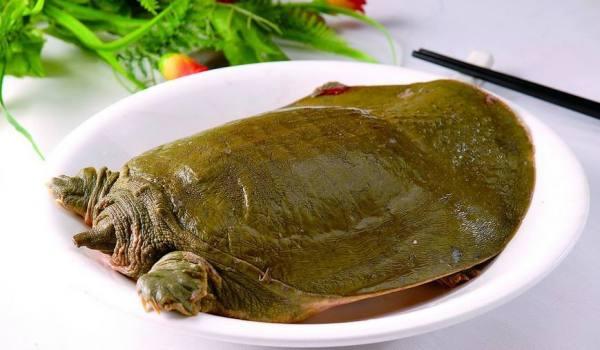 你吃的甲鱼可能有问题,怎么辨别甲鱼的真假?