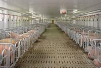建一个存栏500头生猪养殖场需占地多少平米?每平米需要多少建设费?