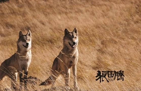 关于狼的故事;有关狼的故事(一定要有真的)