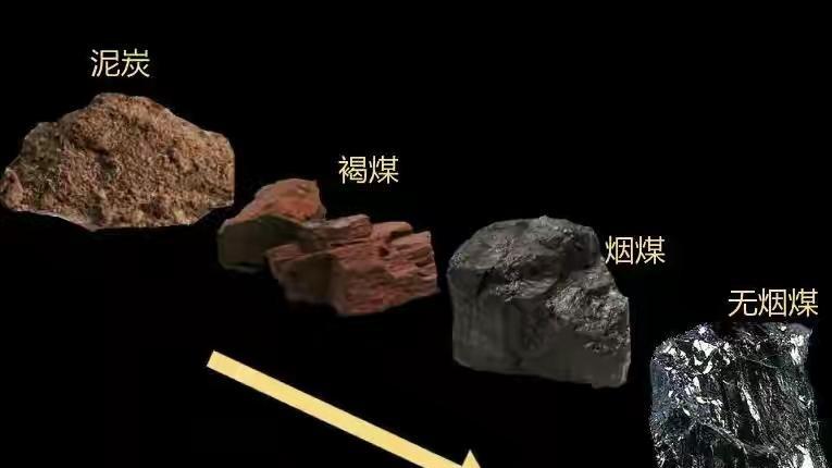 煤是植物形成的,儲量豐富,可遠古地球真有那么多植物嗎?的頭圖