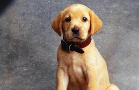 狗狗到底能不能听懂人类说话?