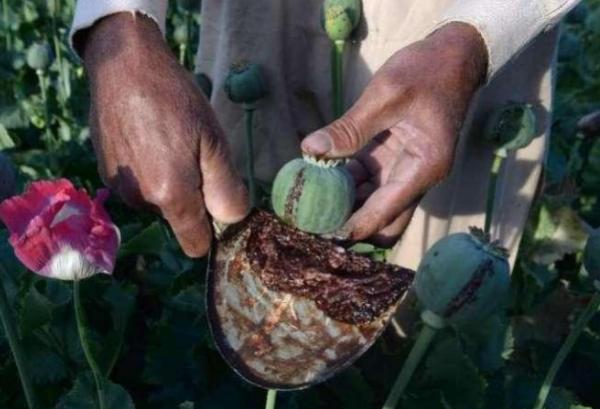 全球最大鸦片产区,九层耕地都被挪用,这些耕地都被用来干嘛了?