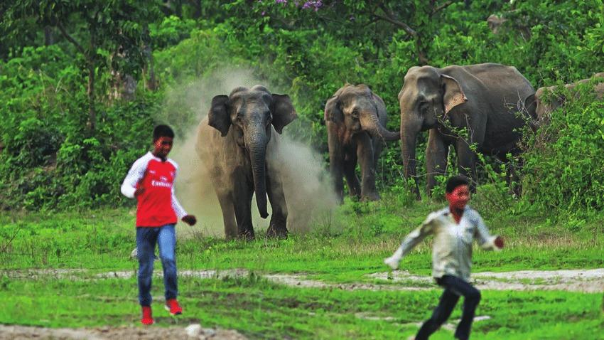 云南野象突然失蹤:為何讓大家緊張萬分?印度的教訓實在太深刻!