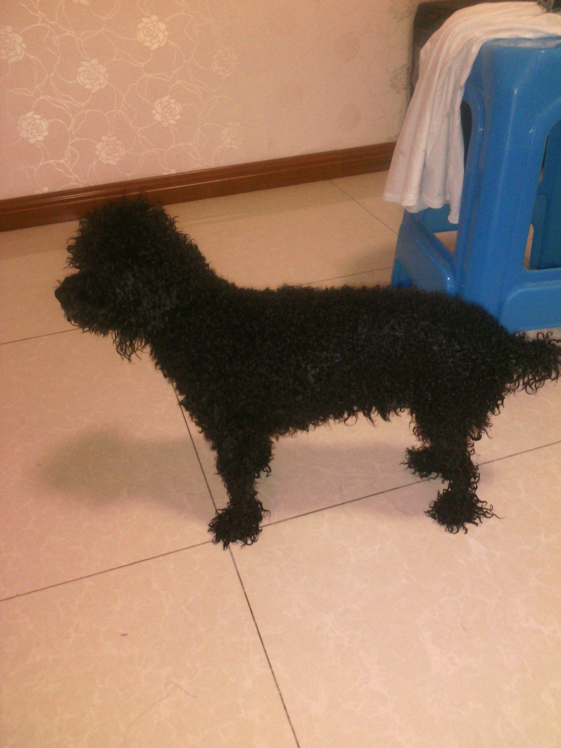 黑色卷毛狗是什么品种