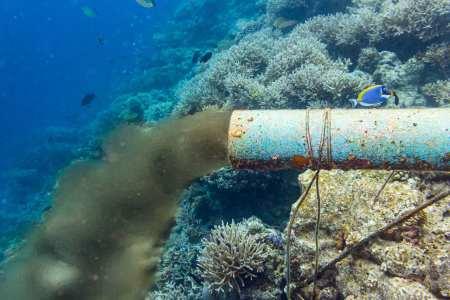 日本要强排核污水,以后哪里的鱼才可以吃?