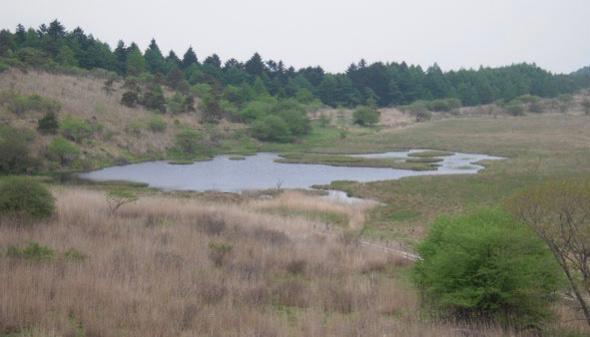 为什么野地里挖个水池,时间一长就有鱼诞生?