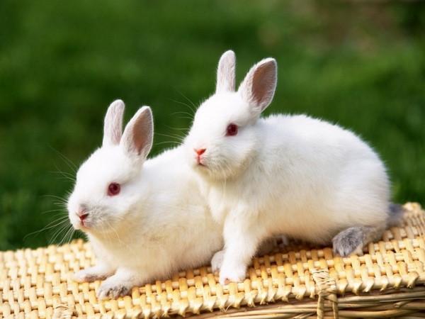兔区究竟是干什么的呢?晋江论坛科普知识来了兔区崩了是真的吗?