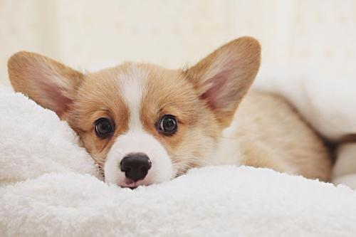 """老话""""狗不咬没见过面的自家人"""",狗到底是怎样分辨""""自家人""""的?"""