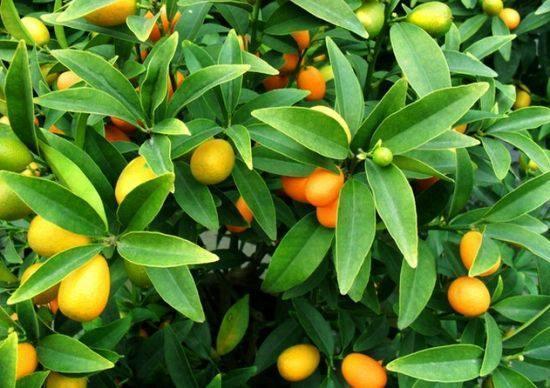 哪些绿色植物盆栽最适合放在家里 旺家又旺财还净化空气?