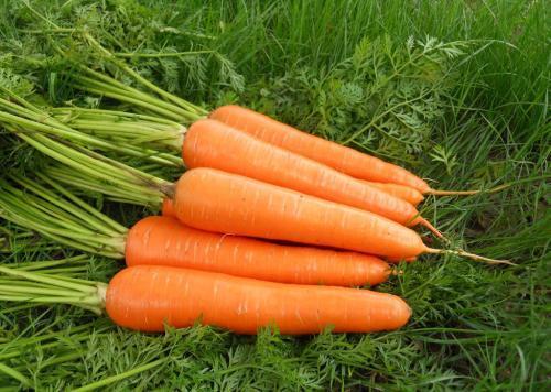 萝卜有什么营养,哪一种萝卜更有营养?