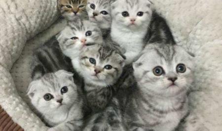 中国猫好养程度排名是怎么样的?