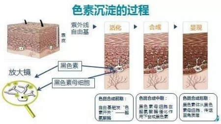 广州宸尔生物科技有限公司怎么样?(广州瑞辰生物科技有限公司)
