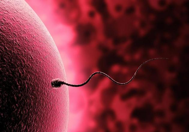 为什么人类卵子的体积是精子的上千万倍?