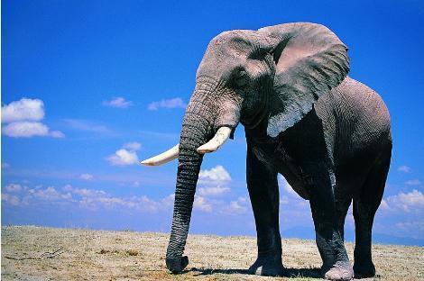 为什么现在的猛犸象牙的价值这么高?