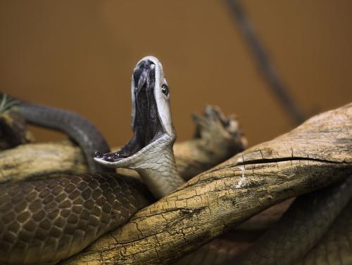 「人类有能力灭绝蛇吗」人类为什么不灭绝蛇类这个物种