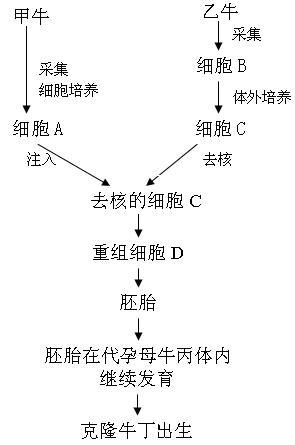 emdr的原理与操作技术_通用技术作品