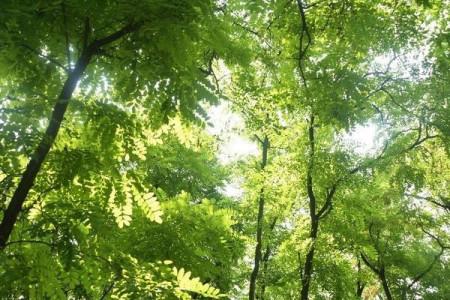 家里门前有大槐树为什么一定要砍掉?