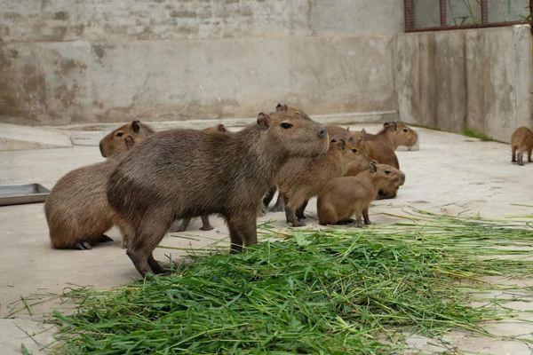 农村的老鼠越来越少,反而城里面的老鼠越来越多,怎么回事?