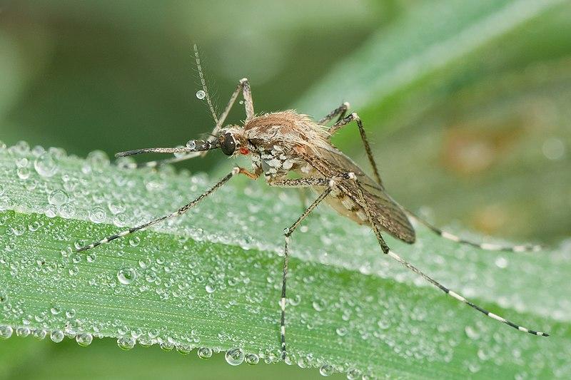 """""""全民公敌""""的花蚊子,到底是从哪来的?怎样才能消灭它?"""