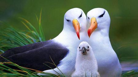 地球上最大、最能飞、最忠贞的飞鸟是什么样子?看得心疼