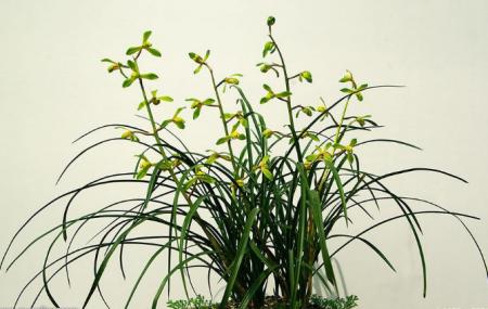 兰草的养殖方法;兰草怎么养得好?