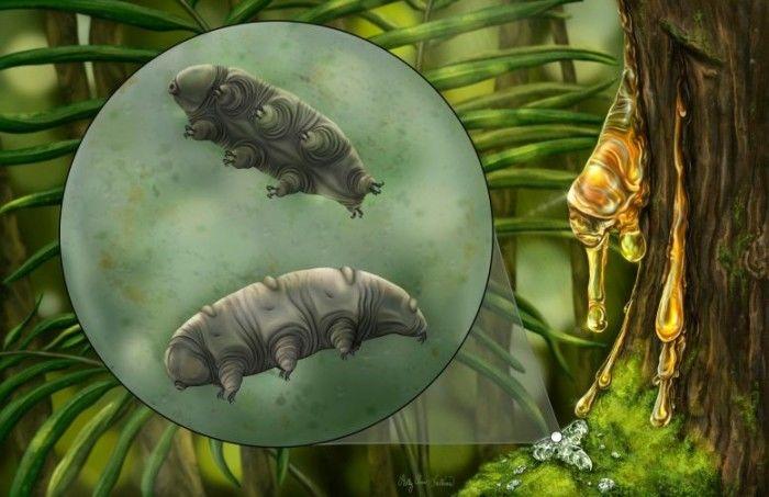 科学家在1600万年前的多米尼加琥珀中发现水熊新物种