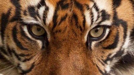 为什么食草动物的眼睛在两边,食肉动物的在前面,原来大有学问!的头图