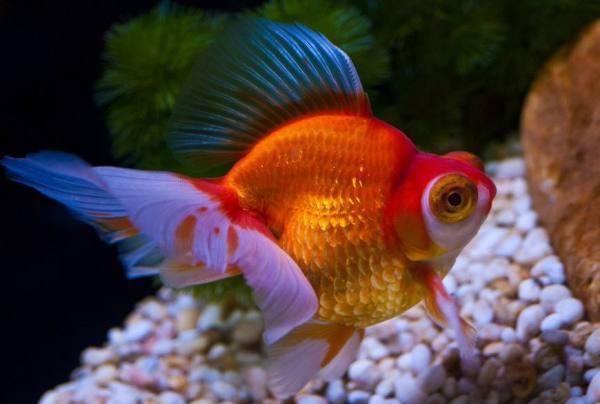 新手适合在家养什么鱼?