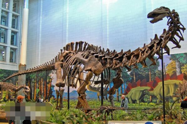 「地球上最大的恐龙」地球上最大的是什么恐龙