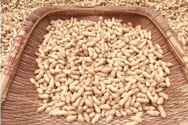 农村收获的秋花生晒干后不打算卖,怎样保存一年花生米不会变色?