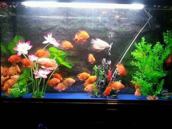 为什么有些人家里喜欢摆放鱼缸?