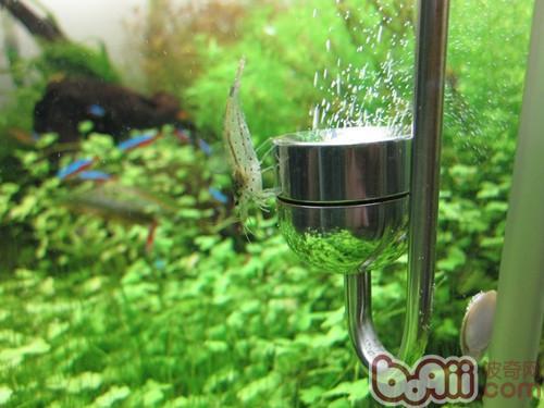 旧草缸该如何防止藻类发生?