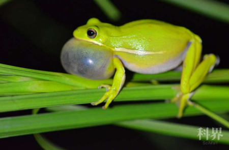 """青蛙如何""""自制""""降噪耳机?"""