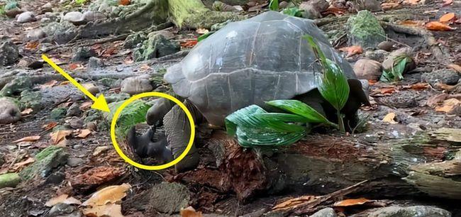 """专家惊呼:""""从未在野生乌龟身上见过""""!环境变化或改变动物行为"""