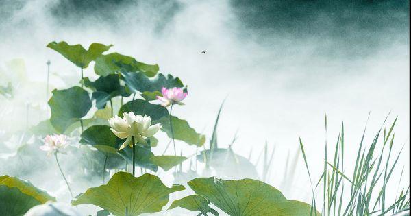 关于莲的诗词,描写莲花的古诗词
