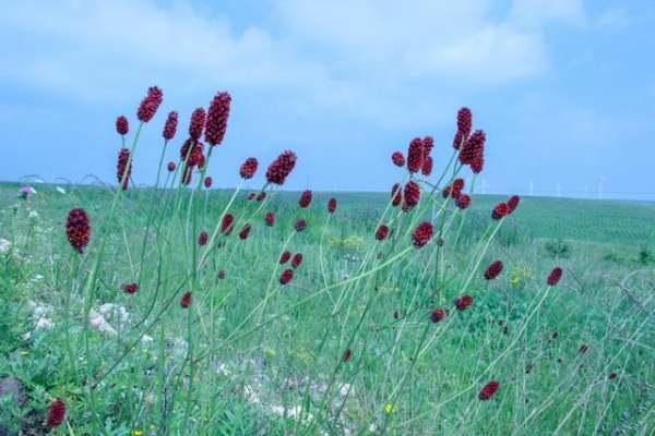 如果想去科尔沁草原玩,应该怎样规划一下行程呢?
