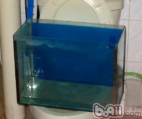 新手养鱼要知道的水知识有哪些?