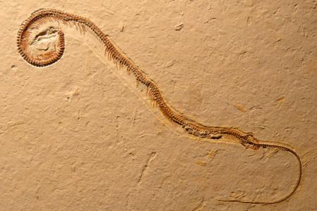 世界上最大的蛇是什么蛇?