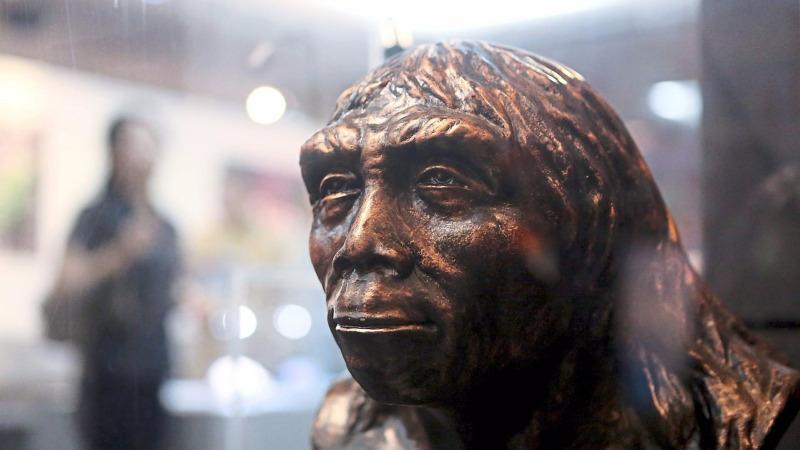 北京猿人化石79年前就丟了,至今下落不明,那復原像是怎么來的