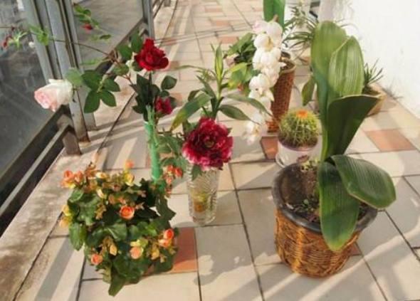 为什么在花卉市场里,买回来的花都活不长呢?