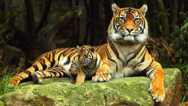 动物们都有固定的发情期,为什么人类一年365天都可以发情?