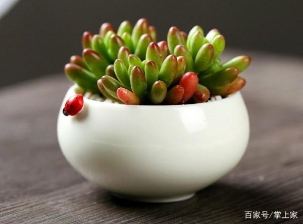 家里的盆栽总是养不活怎么办?