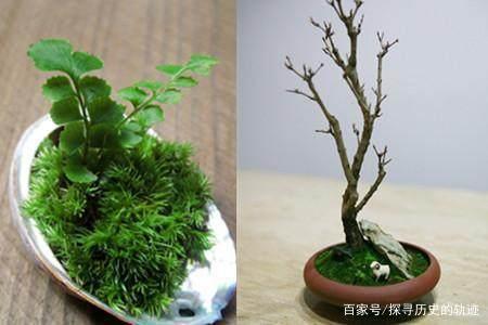 怎样让盆景长苔藓?